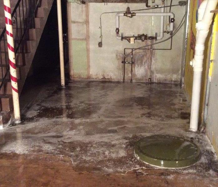 Mold in basement in St. Louis, MO