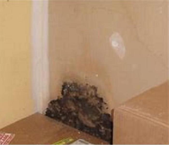 Mold Discovered behind storage box